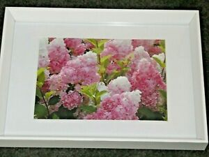 Hydrangea Paniculata Vanilla Strawberry Flowers Pink White Framed Print Gorgeous