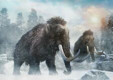 A1| Wolly Mammoths Poster Size 60 x 90cm Extinct Animal Poster Gift #16002
