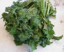 Broccoli Raab Italian Heirloom 100+ Organic NON-GMO Open Pollinated Super Taste