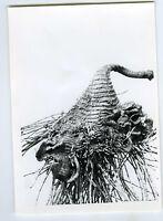 PHOTO scientifique plante botanique science CURIOSA forme monstrueuse herbier