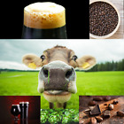 1 Gallon Nano-brew   Moo Moo Chocolate Milk Stout [Partial Mash] Recipe Kit