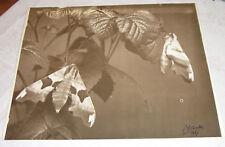 ancienne belle photo originale signe l.le charles 1937 art
