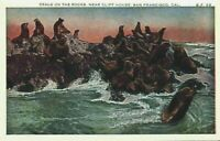 Seals On The Rocks Near Cliff House San Francisco California CA Vintage Postcard