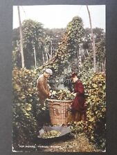 Kent HOP PICKING Typical Pickers c1906 Old Postcard by Young & Cooper