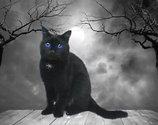Black Cat Blue Eyes Gray Home Decor Feline Wall Art Photo Print B&W Picture