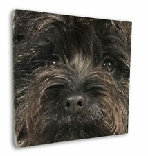 "Brindle Cairn Terrier Dog 12""x12"" Wall Art Canvas Decor, Picture Pri, AT-CT2-C12"