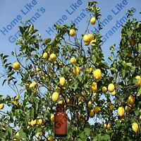 Lemon Essential Oil - 100% Pure and Natural - Free Shipping - US Seller!