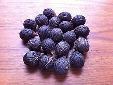 Foxtail Palm Seeds  20 SEEDS Wodyetia bifurcata 20 FRESH seeds