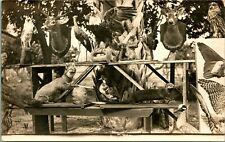 RPPC ~ TAXIDERMY ~ DEAD ANIMALS ~ DEER ~ OWL ~ BIRDS ~ CAT ~ HUNTING RIFLE   64D