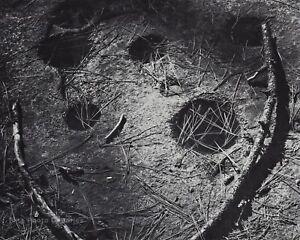 1950s Vintage ANSEL ADAMS Indian Mortar Holes Yosemite Valley Photo Art 11X14