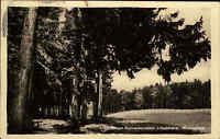 Benneckenstein Harz Sachsen Anhalt DDR AK 1947 an der Rhumwiese Baum Bäume Tree