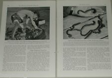 1946 magazine article about WORMS, sandworms bloodworms bait Maine worm harvest