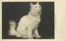 Rppc Rotograph Postcard White Turkish Angora Cat Mrs. Tabby White B 408
