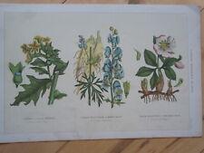 COMMON POISONOUS PLANTS old vintage antique Victorian colour print 1890's