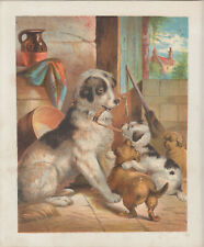 NEWFOUNDLAND DOG NEWFOUNDLAND PUPPIES ANTIQUE LITHOGRAPH ART PRINT 1871