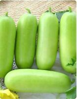 33 Seeds Lots Heirloom Vegetable Wax Gourd (ฺHatch) From Thai Garden Asian Rare