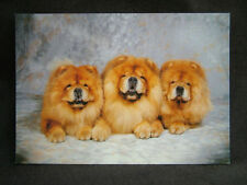 Dog J Salmon Collectable Animal Postcards