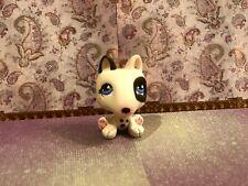 New listing littlest pet shop Bull Terrier (blue Eyes)