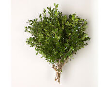 Boxwood Bunches Wholesale / Grower Direct