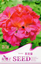 6 Seeds/Pack Storkbill Seed Pelargonium Graveolens Flower Original Package A144