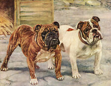 ENGLISH BULLDOG NAMED DOGS OLD DOG COLOUR ART PRINT PAGE FROM 1934 BY F. T. DAWS