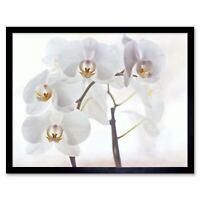 Orchid Flowers White 12X16 Inch Framed Art Print