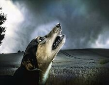 METAL REFRIGERATOR MAGNET Dog Howling At Night Sky In Field Dogs