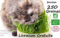 Graines HERBE A CHAT  - Certifié BIO - 250 graines - A semer -France