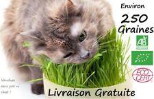 Graines HERBE A CHAT  - Certifié BIO - 250 graines - A semer - France