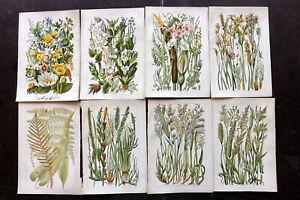 Gordon C1900 Lot of 9 Antique Botanical Prints. Book Plates