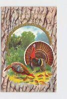 PPC POSTCARD THANKSGIVING GREETINGS TURKEYS CHICKS IN WOODS GOLD EMBOSSED