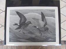 Original  Rex Brasher #106-1  Hand Painted  Print Leach Petrel  #106-1REX2 DSS