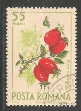 Romania #1706 (A556) VF USED - 1964 55b Rose Hips