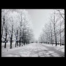 LED Luminous Snow Road Tree Lighted Canvas Print Art Painting Home Wall Decor