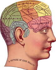 Vintage Medical Anatomy Phrenology Illustration Chart Real Canvas Art Print New