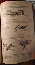 libro zoologia - firenze 1904 - riccamente illustrato -