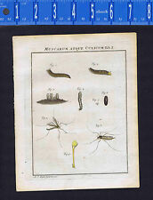 Mosquitoes-Life Cycle- Muscarum Atque Culicum-Rosel 1749 Engraved Print
