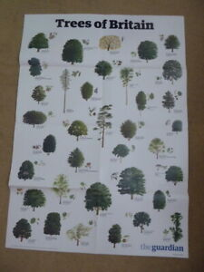 Guardian Wallchart - educational poster - A1 size - TREES OF BRITAIN