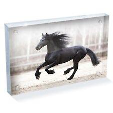 "Black Friesian Horse Photo Block 6 x 4"" - Desk Art Office Gift #12540"