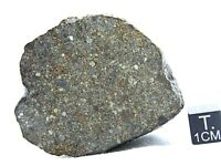 NWA 13448 LL3  Primitive Chondrite Meteorite Rare, Type 3 Meteorite