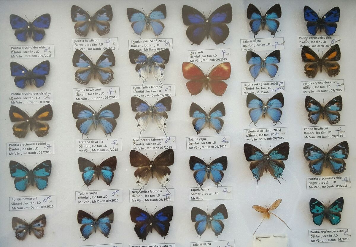 Insect*butterflies*moths*Vietnam
