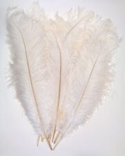 White Ostrich Feather #2 Grade 16-20 inch Long per Each