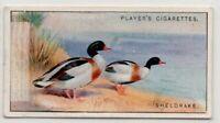 Sheldrake Duck Tadorna cornuta Gamebird c90  Y/O Ad Trade Card