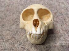Taxidermy skeleton bones tattoo stuffed voodoo SKULL RHESUS MACAQUE monkey