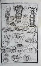 RARE LARGE 1785 ANTIQUE ENGRAVING - CRUSTACEOUS ANIMALS - CRABS - MARINE SPECIES