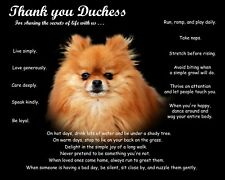 Red Pomeranian Dog Picture/Wall Art-Personalized w/Name-Unique Dog Lover's Gift
