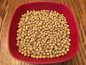 Raw Soybeans NON-GMO for Tofu, Soy Milk, or Sprouts. 2020 IOWA Crop! 1-25+ lb