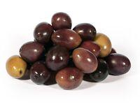 Peranzana Italian Olive Olea Europaea Seeds 5 PCS VALUED VARIETY!
