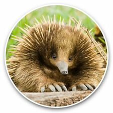 2 x Vinyl Stickers 30cm - Echidna Animal Australia Wild  #44934