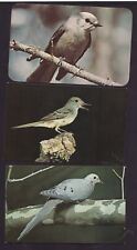 Lot of 3 Vintage Postcards of Birds Canadian Jay MOURNING DOVE and FLYCATCHER